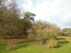 Vue-sur-le-jardin-arbore-depuis-l'-arriere-du-gite