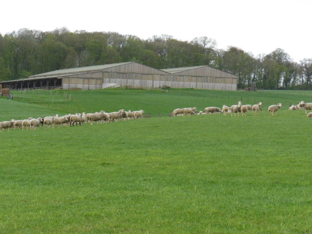 Vue sur une partie des prés de notre ferme, avec nos moutons