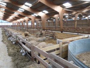 Notre bergerie en bois et quelques-uns des moutons qui l'habitent