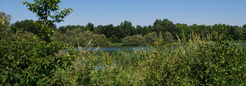 Le Plan d'eau du Monteuil, un étang servant de conservatoire naturel près de Nogent-sur-Seine