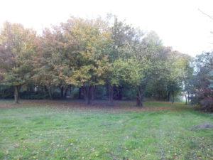 Une partie du jardin en bordure de bois