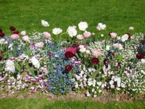 L'un des nombreux massifs fleuris du Square Jean Cousin : tulipes et myosotis